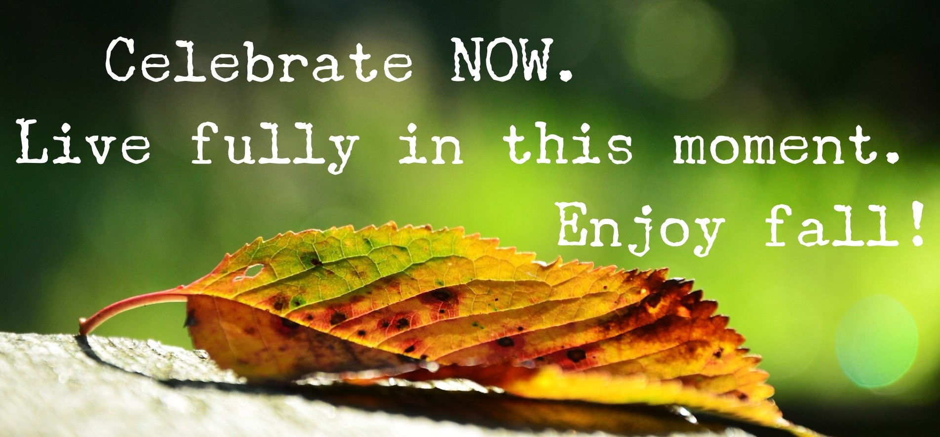 Sometimes, we homeschool moms tend to overthink making memories. The Nester has it right… It doesn't have to be perfect to be beautiful. To that end, here are 10 ways to enjoy fall right now. Don't wait to organize the perfect nature study hiking trip or to get to the store to bake an apple pie. Celebrate now. Live fully in this moment. Enjoy Fall!